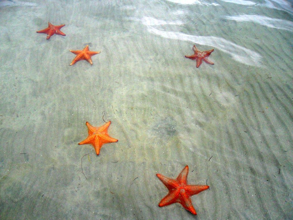 Stelle marine nel mar dei Caraibi a Panama