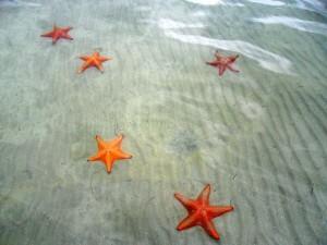 Stelle marine nei bassi e cristallini fondali delle isole dell'arcipelago panamense di Bocas del Toro